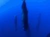 Śpiące wieloryby
