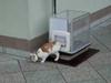 Kot, który jeździ wi...