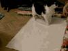 Jak zapakować kota n...
