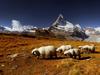 Alpy Walijskie, Szwa...