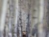 Misio w lesie - PN G...