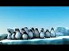 Sprytne pingwiny