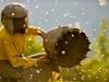 Kraina Miodu | Honey...