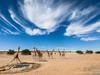 Żyrafy w Transgranic...