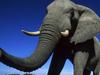 Dlaczego słoń ma dłu...