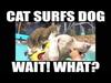 [Tresura kotów] Kot...