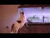 Spanikowane koty są...