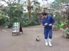 Towarzyski pingwin