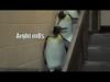 Penguin party!