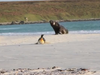 Pingwinia ucieczka p...