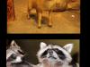 Wypychanie zwierząt...