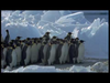 Emperor Penguins v L...